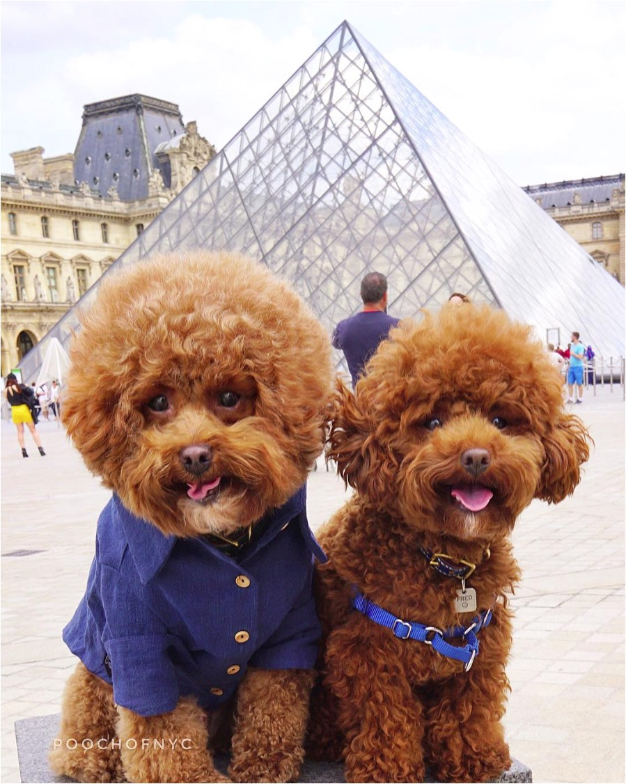 Pooch of NYC & Little Fred Tinkles wear their personalised leather collar from Sebastian Says