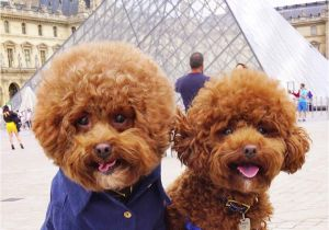 Cute Girls Hairstyles Dog Pooch Of Nyc & Little Fred Tinkles Wear their Personalised