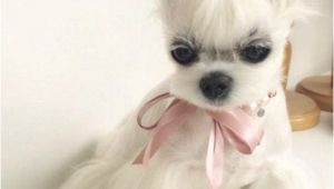 Haircuts for Dogs 15 Very Interesting and Funny Dog Haircuts Dogs